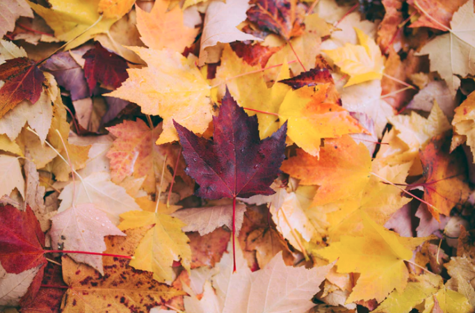 Ways to welcome fall in to your home
