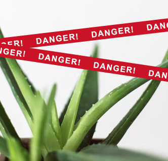 Protect Your Pets From These Poisonous Common Household Plants
