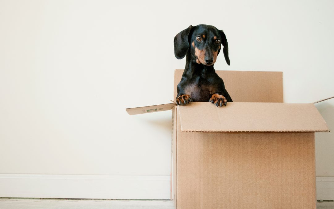 Five Tips To Help Make Your Move Easier With Packing